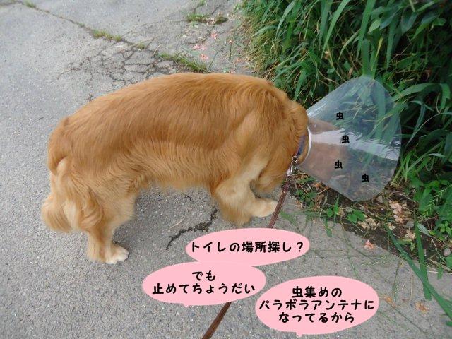 003_20120612113525.jpg