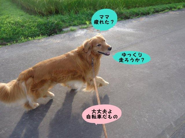 003_20120823204821.jpg