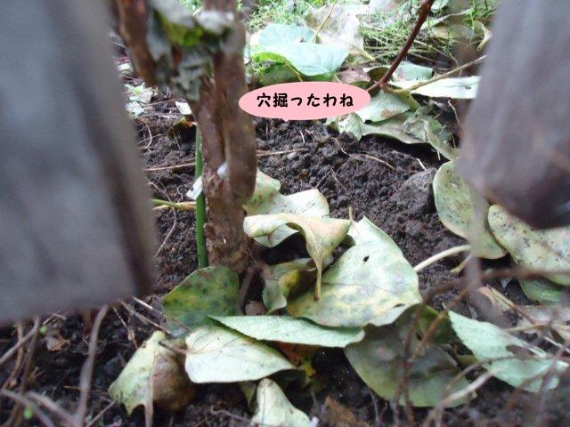 003_20121006200119.jpg