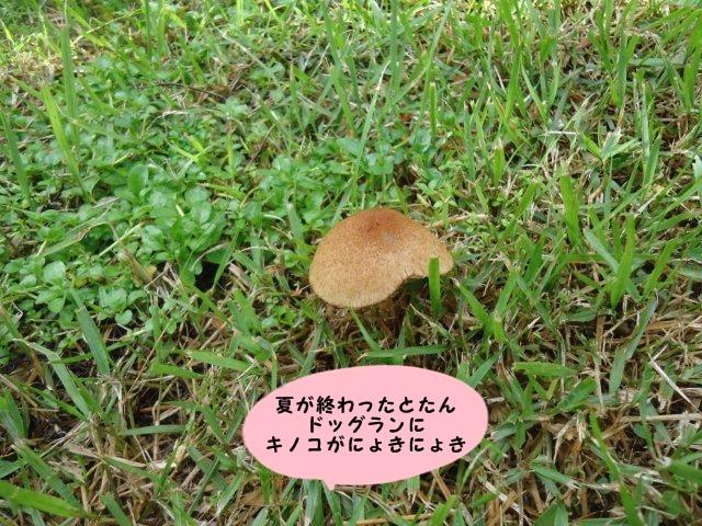 003_20121012201942.jpg