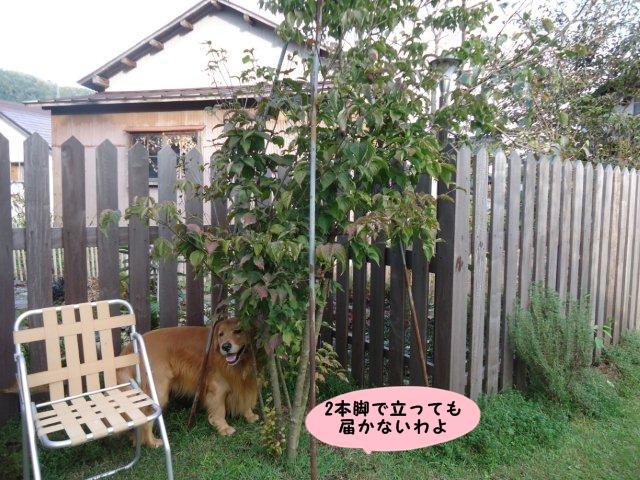 003_20121014205248.jpg
