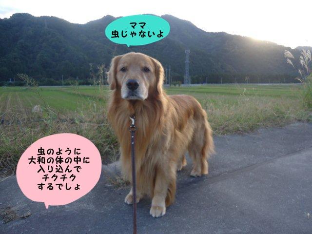 003_20121019202402.jpg