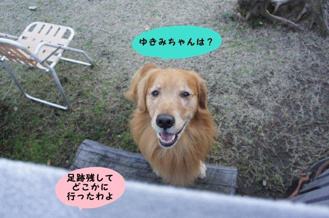 003_20121125214558.jpg