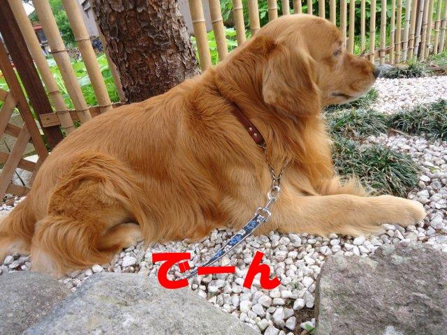 004_20120525210836.jpg
