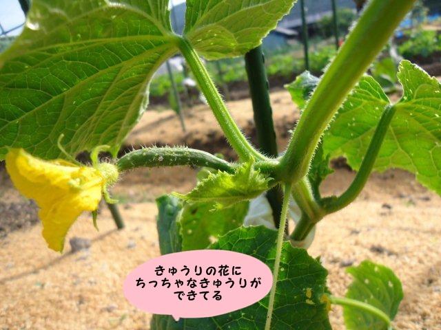 004_20120531213552.jpg