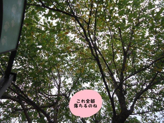 004_20120929201904.jpg