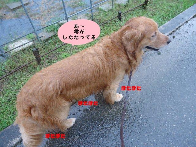 004_20121001201713.jpg