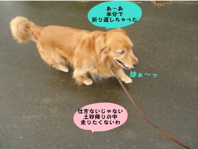 004_20121005210634.jpg