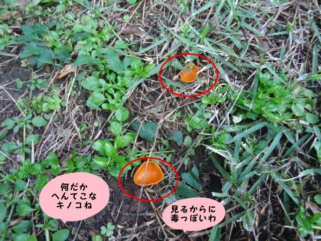 004_20121014205248.jpg