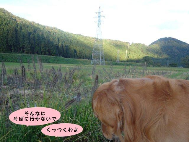 004_20121019202401.jpg