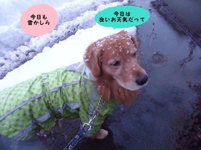 004_20121213201449.jpg