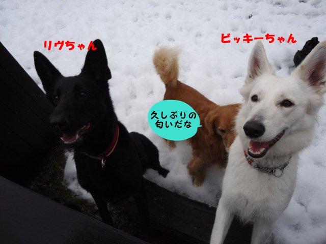 004_20121222175118.jpg