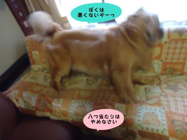 005_20120608102418.jpg