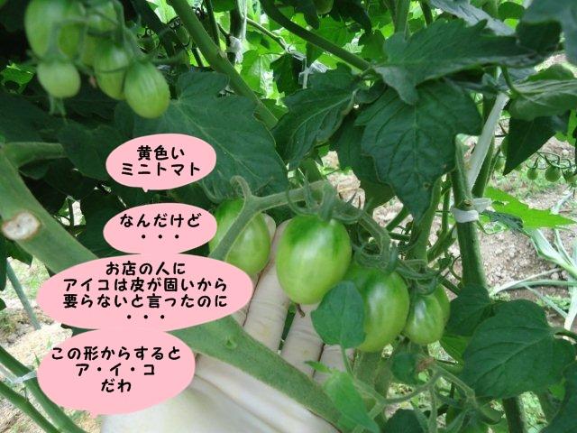 005_20120705174201.jpg