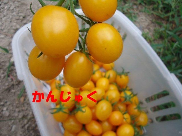 005_20120813194311.jpg