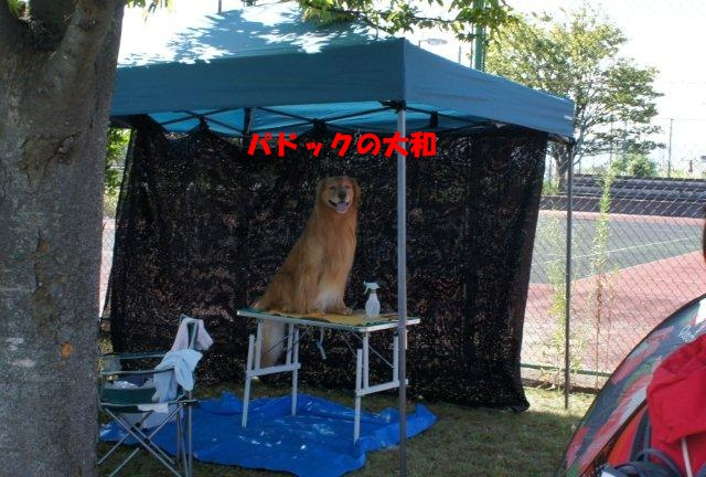 005_20120916213309.jpg