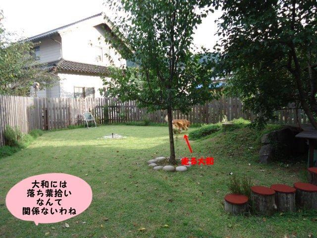 005_20120929201904.jpg