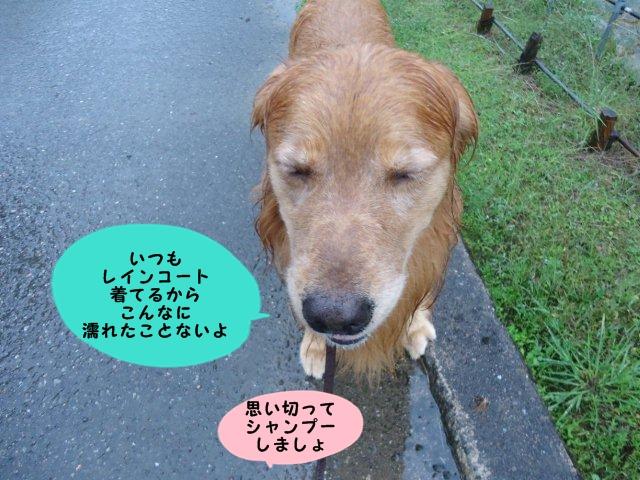 005_20121001201713.jpg