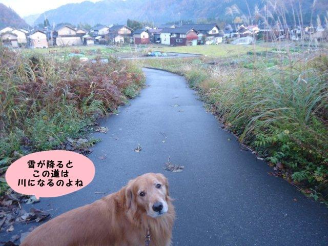 005_20121121201211.jpg