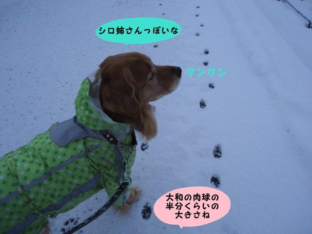 005_20121219200327.jpg