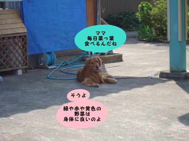 006_20120514201334.jpg