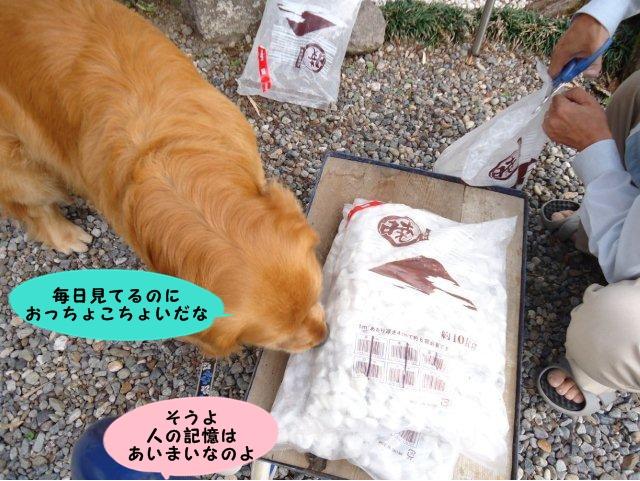 006_20120525210835.jpg
