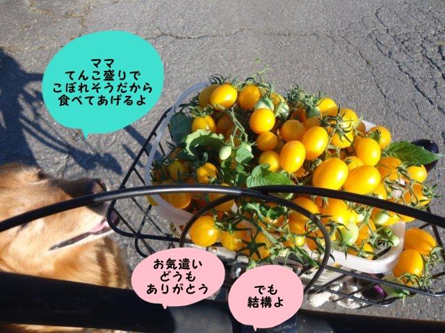 006_20120820210959.jpg