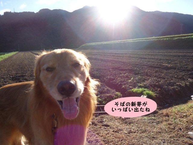 006_20120822201811.jpg