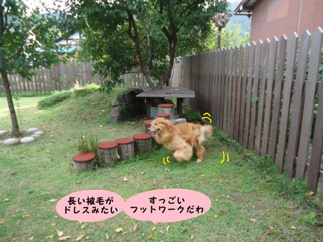 006_20120929201903.jpg