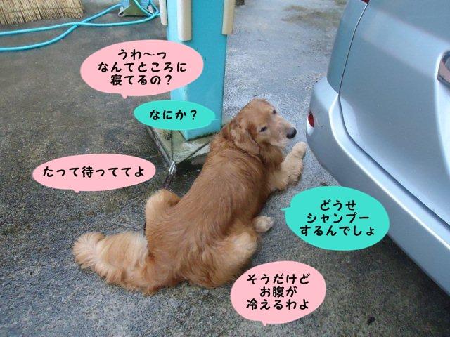 006_20121001201712.jpg