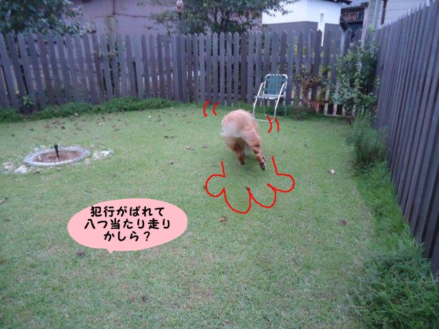 006_20121006200118.jpg