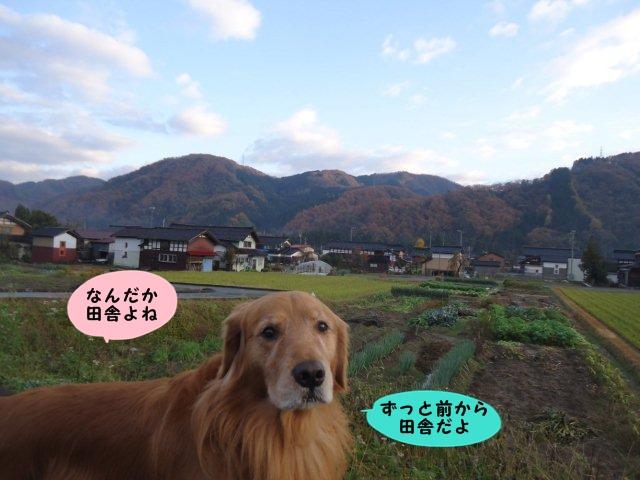 006_20121121201212.jpg