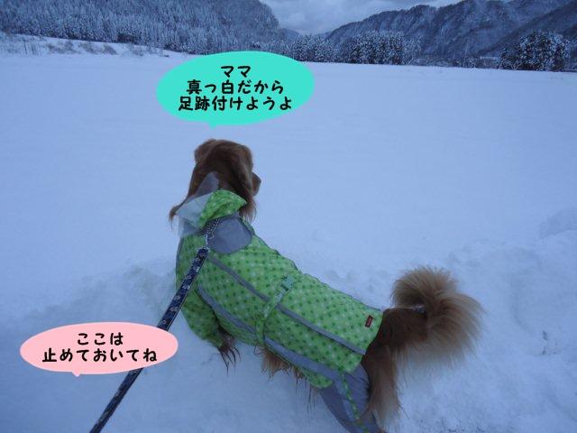 006_20121210163425.jpg