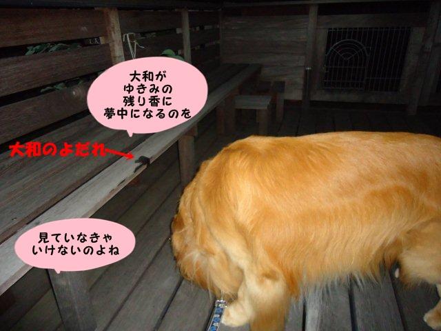 008_20120816212124.jpg