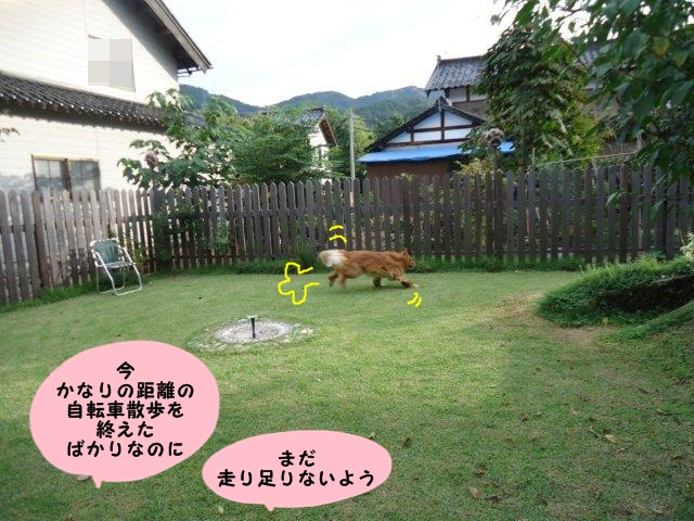 008_20120929201946.jpg