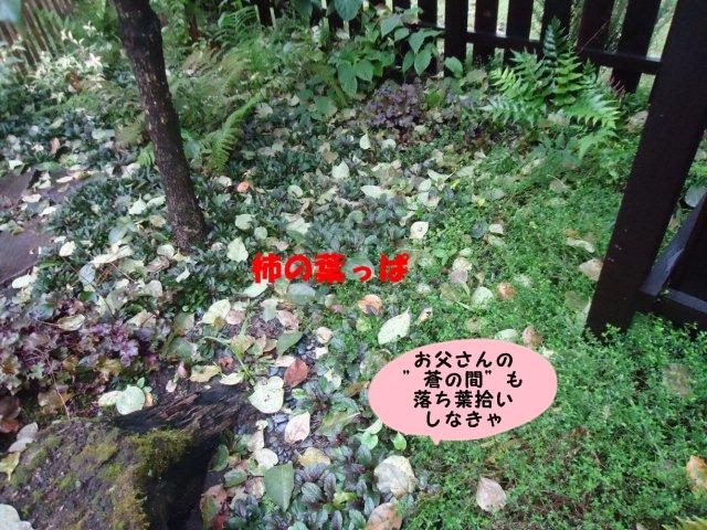 008_20121005210733.jpg