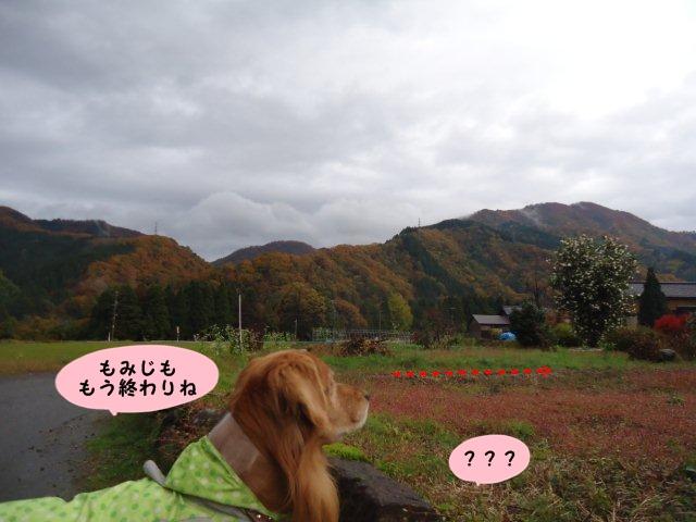 008_20121116093452.jpg
