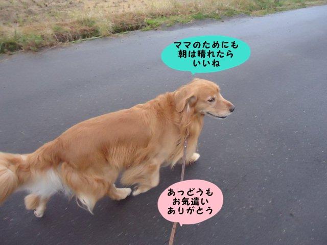 008_20121124211027.jpg