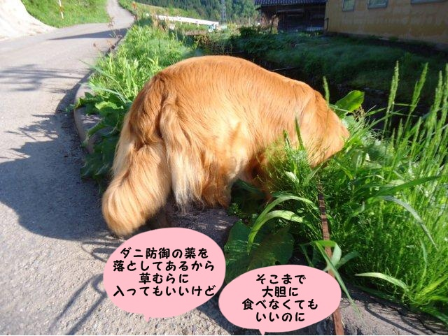 009_20120513202639.jpg