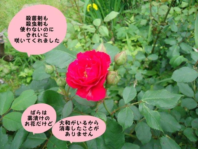 009_20120602202338.jpg