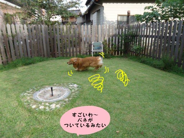 009_20120929201946.jpg