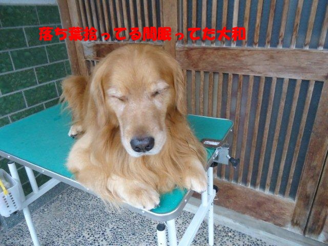 009_20121005210732.jpg