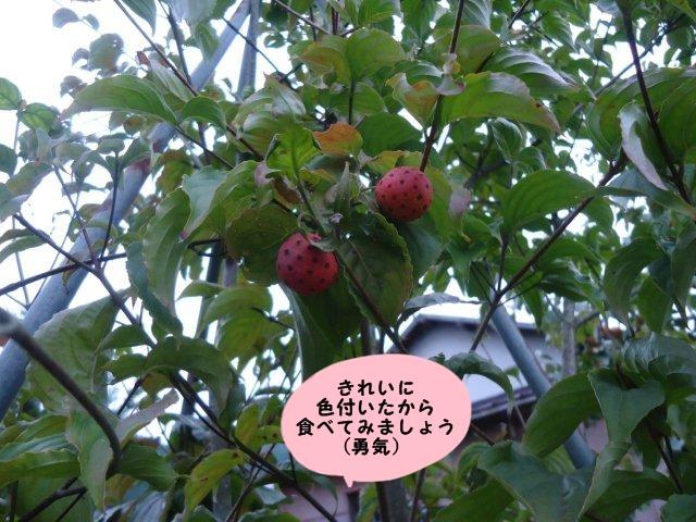 009_20121006200353.jpg