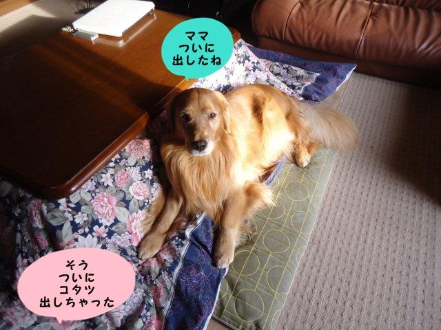 009_20121013203839.jpg