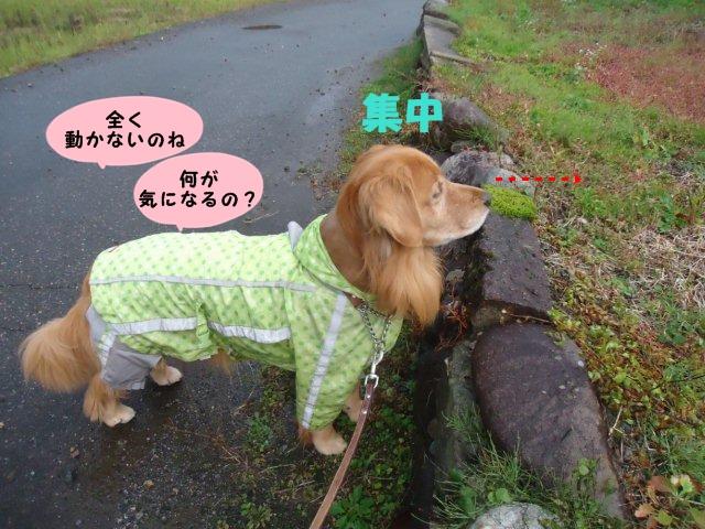 009_20121116093452.jpg