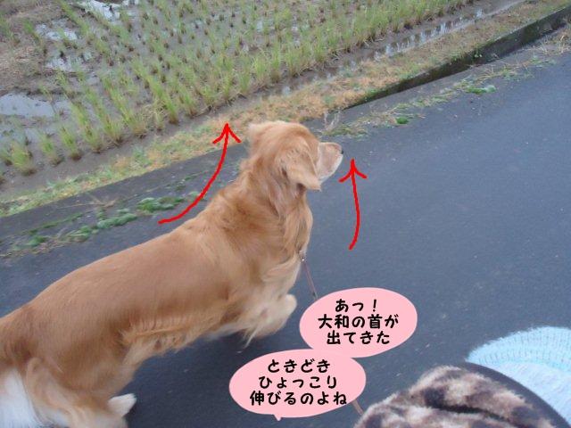009_20121124211046.jpg