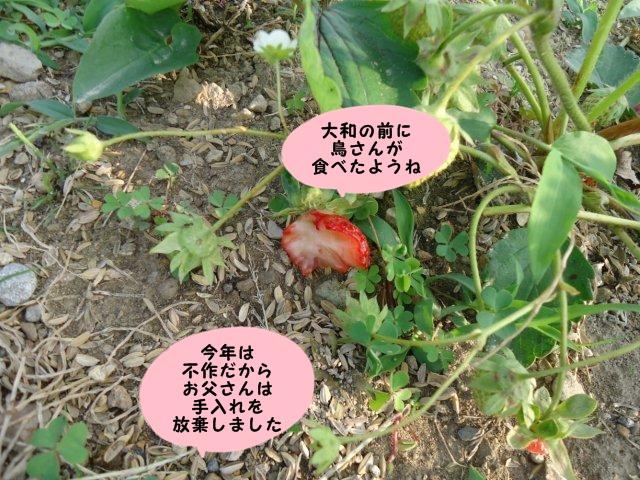010_20120603210016.jpg