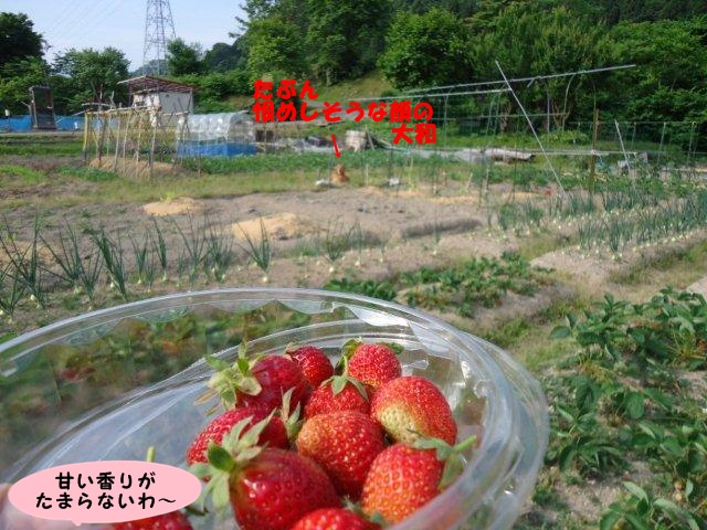 010_20120608102513.jpg