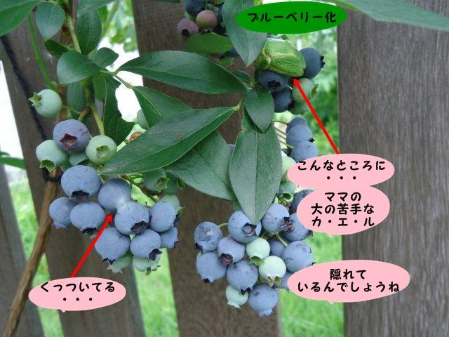 010_20120629131650.jpg