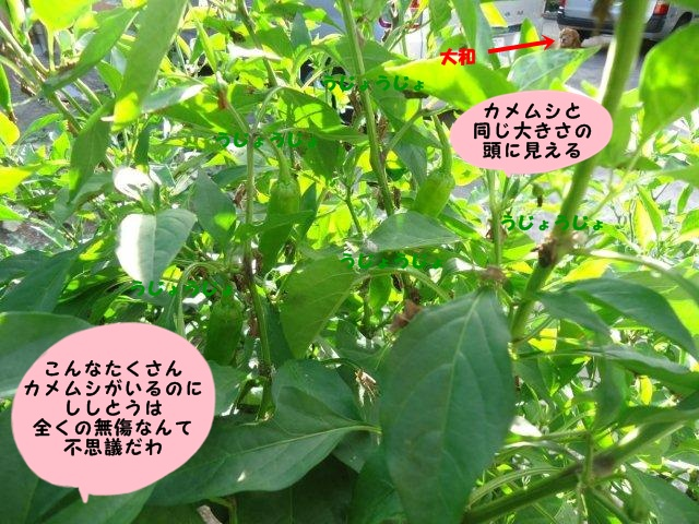 010_20120823204904.jpg